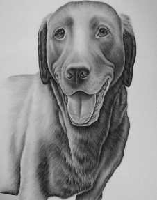 """""""Drawing of Happy Dog"""" Graphite Pencil on Paper, 16""""x20"""", SOLD"""