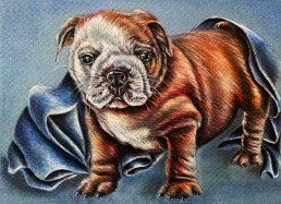 """""""Bulldog Puppy with Blue Blanket"""" 5""""x7"""", Colored Pencil on Paper, $50"""