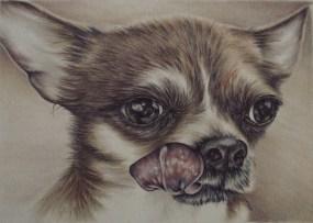 https://www.etsy.com/listing/234368555/chihuahua-dog-drawing-8x10-dog-art-print?ref=shop_home_active_15