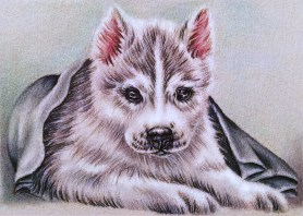 https://www.etsy.com/listing/234369457/husky-puppy-dog-drawing-8x10-dog-art?ref=shop_home_active_8