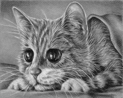 https://www.etsy.com/listing/228653420/kitten-cat-coloring-book-pages-adult?ref=shop_home_active_2