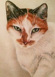 """""""Lounging Cat"""" Colored Pencil on Paper, 5""""x7"""", SOLD"""