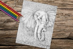 https://www.etsy.com/listing/254948815/elephant-animal-coloring-book-page-adult?ref=shop_home_active_15
