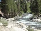 Sierra Nevada Greenery