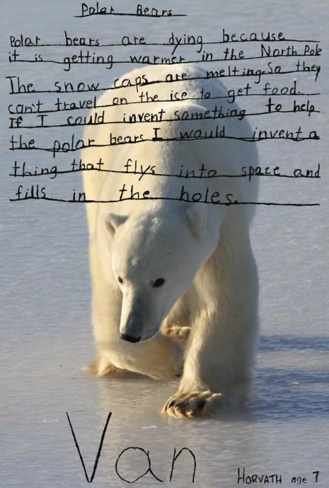 Polar bears essay