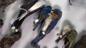 Birds killed