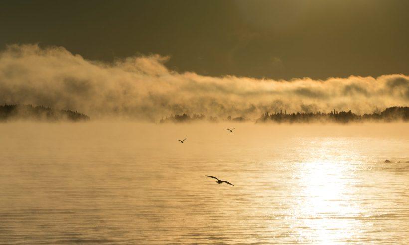 Joan Sullivan, photographer, Quebec, Canada, morning, mist, lake, birds