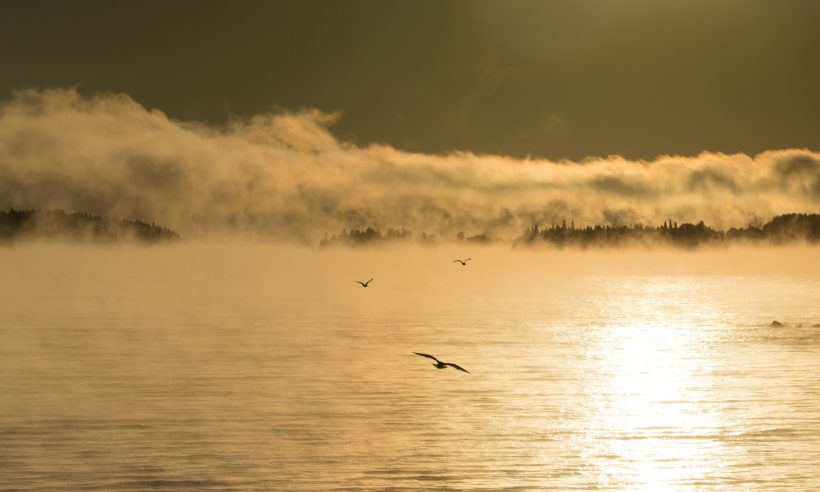 Joan Sullivan, photographer, Quebec, Canada, morning, mist, lake, birds