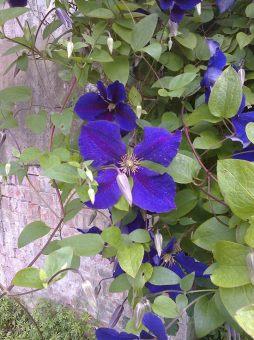 pickhams garden 6