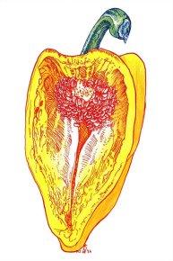 Inktober Pepper