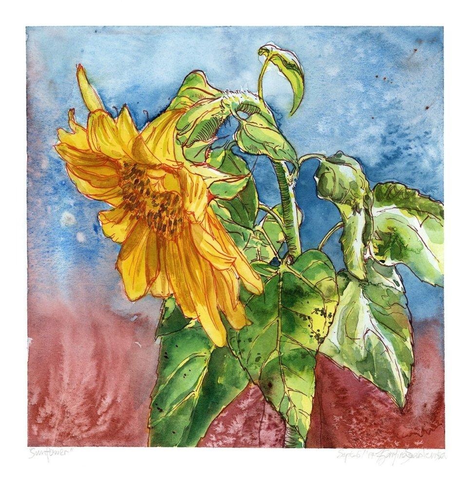 sunflower watercolour painting