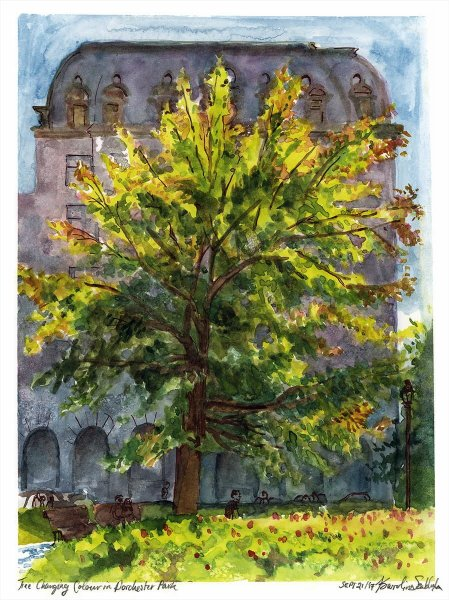 """9""""x12"""". Watercolour on 140lbs watercolour rag paper. A tree in mid-transition from green to yellow, painted on-location. ~2017"""