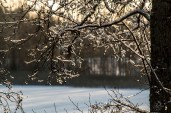 icy_branches_0149p