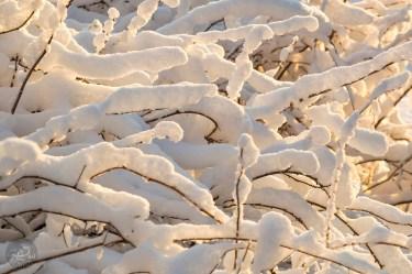 snow_branches_sun_0063p