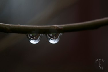 two_drops_0059p