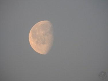 moon1415p