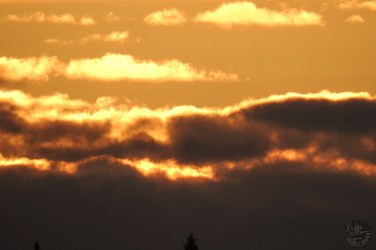 pilvet1832p