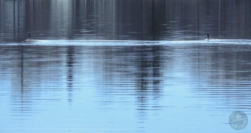 swimming_2235p