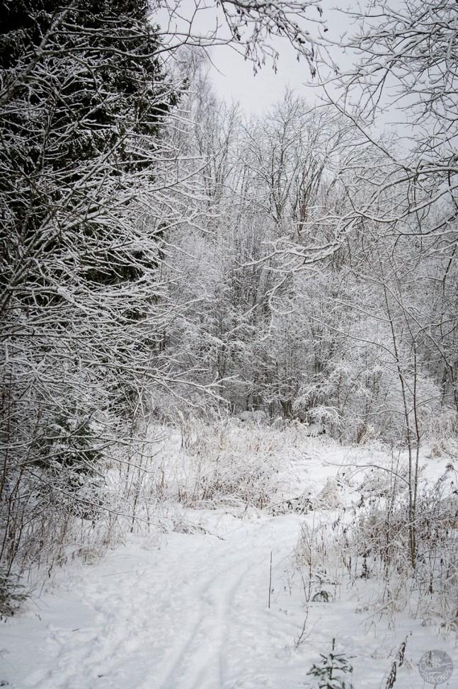 luminen_latu_0182p