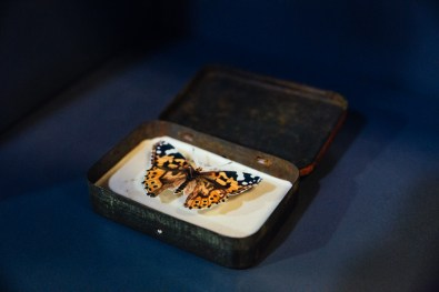 Butterfly tin by Robert Good, for sale at the Waterstones Hub