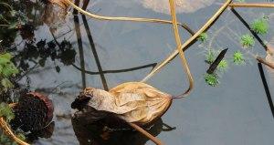 "Kristie Gardiner, Newport. Detail of ""NYC Duck Pond,"" photograph"