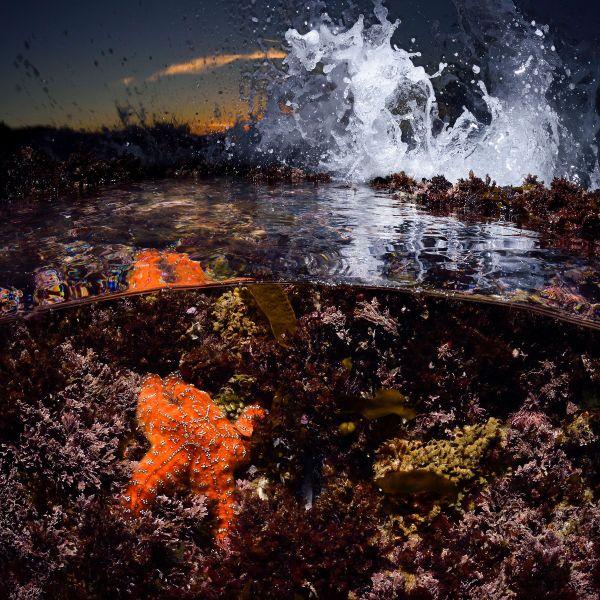 Sea Star Fine Art Photography