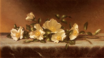 Cherokee Roses On A Light Gray Cloth