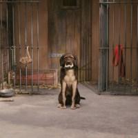 """Бешеный пёс из """"Бесподобного мистера Фокса"""""""