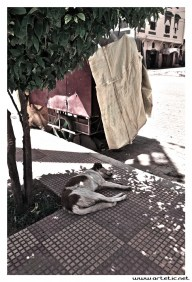 Dog resting on the street in Aguelmous, Morocco