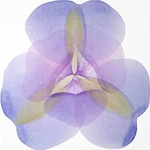 Iris by Jitka Anlaufova
