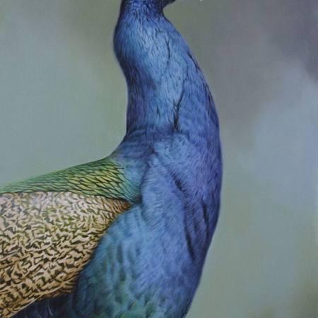 Original Animal Painting by Brett Jarrett | Fine Art Art on Canvas | Indian Blue Peacock