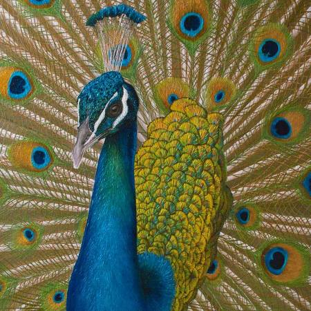Original Animal Painting by Russell Hinckley | Figurative Art on Canvas | Peacock
