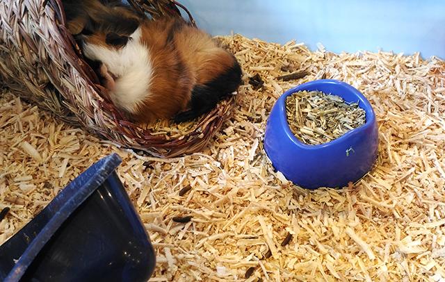 hobbes and landes lego corner bgc taguig lifestyle mommy blogger www.artofbeingamom.com 17
