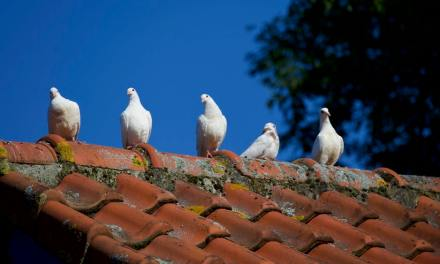 5 Signs That You Are in Need of a New Roof