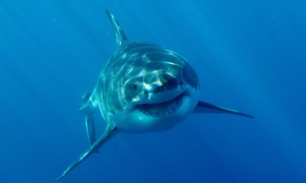 Shark Week: Top 5 Reasons We Think Sharks are Intelligent by Nature