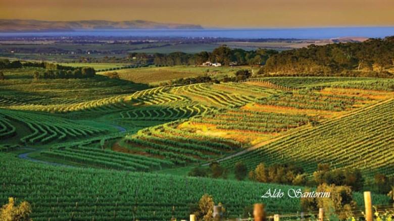 Fleurieu Australia Mclaren Vale wine region