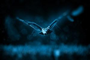 owl-518838_1920