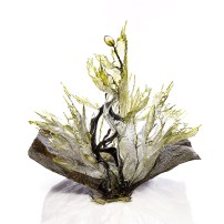 Annalù - Olio di oliva
