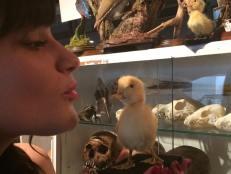 Taxidermy Chick