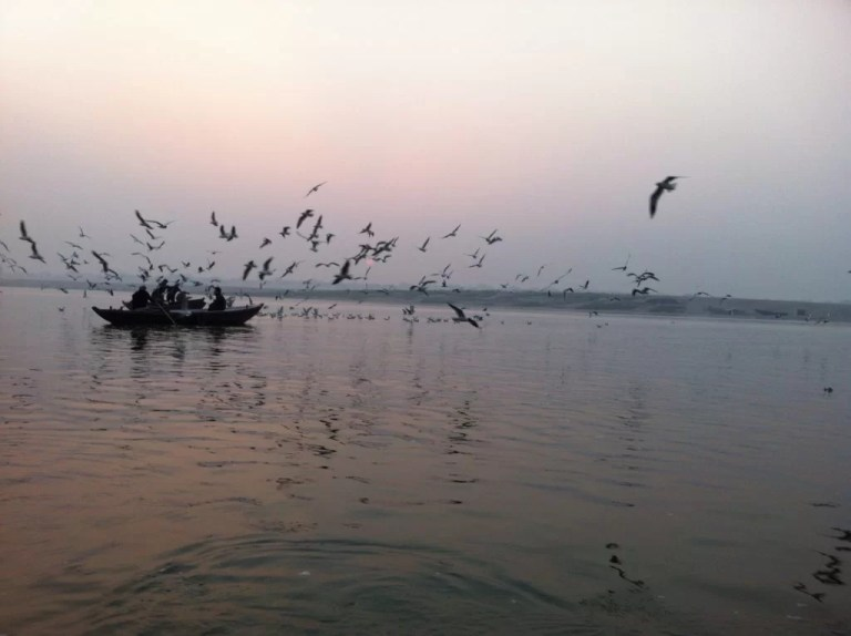 ganga-river-bird