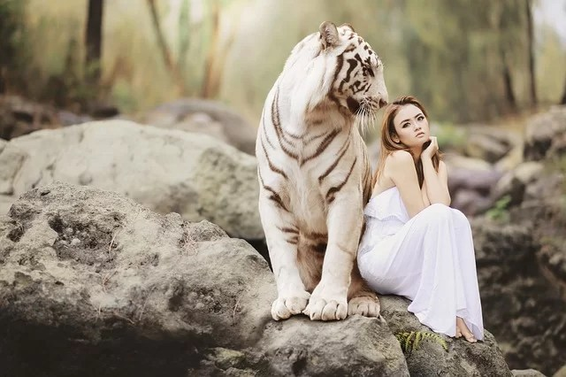 woman and white tiger