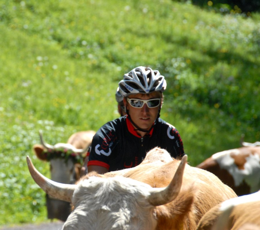 Mit Kühen auf Tuchfühlung