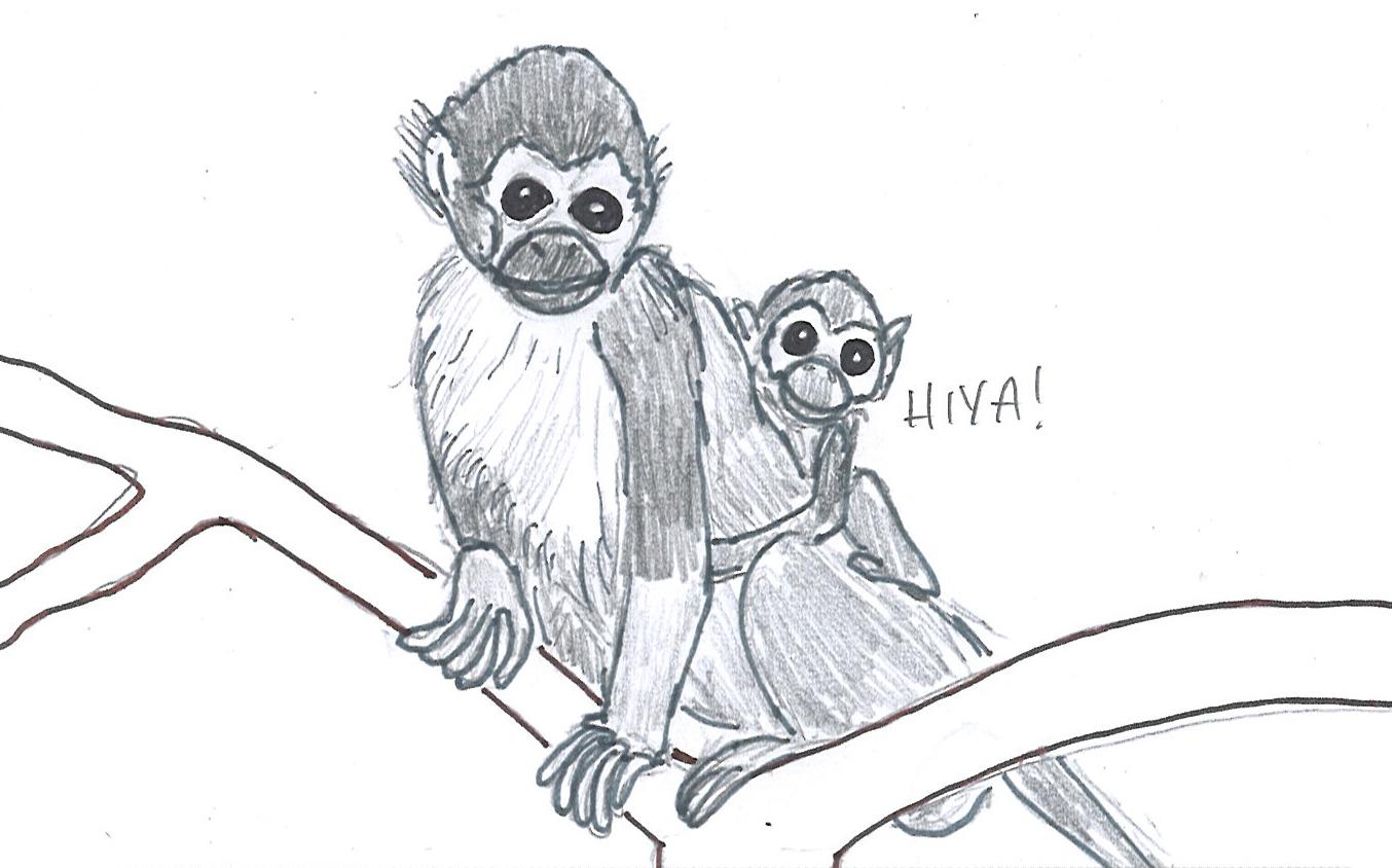 Pencil Drawings Of Baby Monkeys