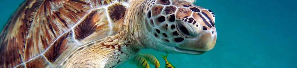 bali turtle sanctuary