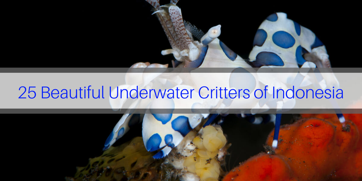 Critters of Indonesia
