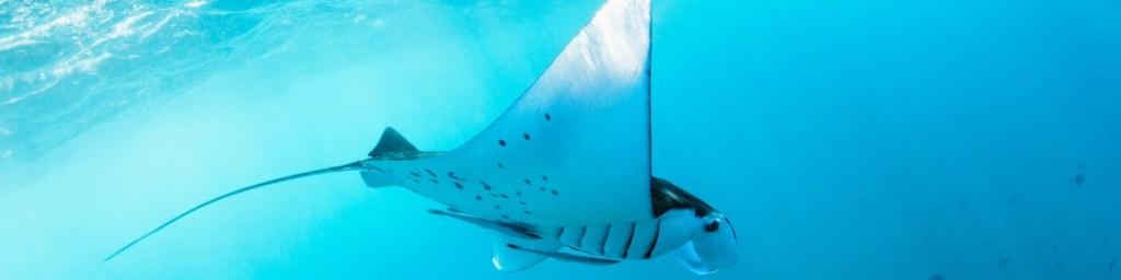 scuba diving gorontalo