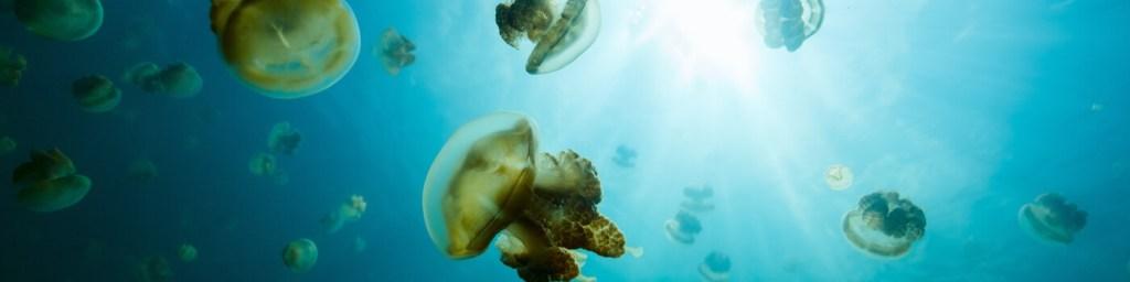 scuba diving misool