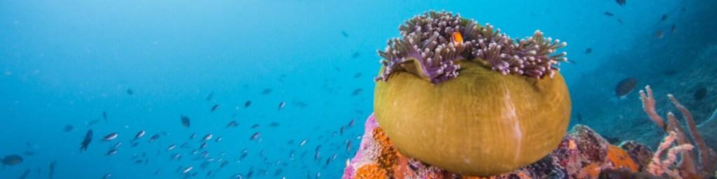 scuba diving maratua