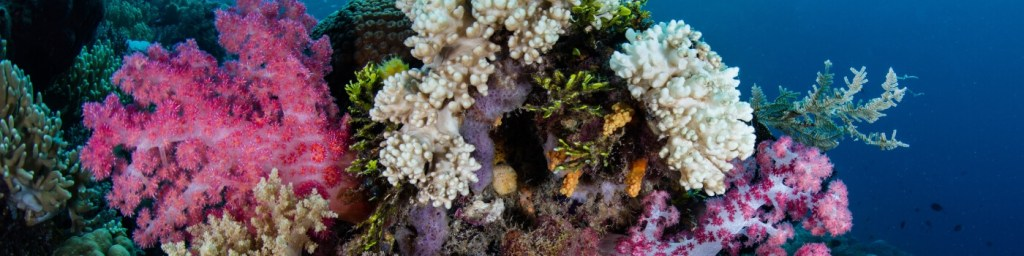 scuba diving wakatobi