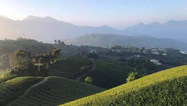 3 Reasons Why Taiwan Makes Better Quality Tea